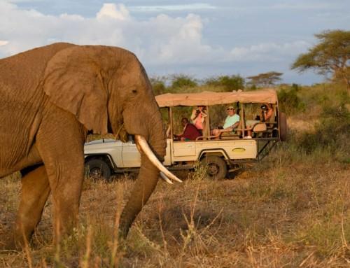 How to Safari – Private Safaris