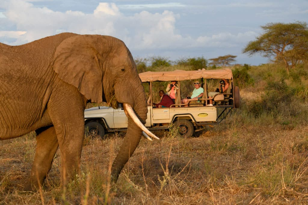 private safari off road elephant encounter