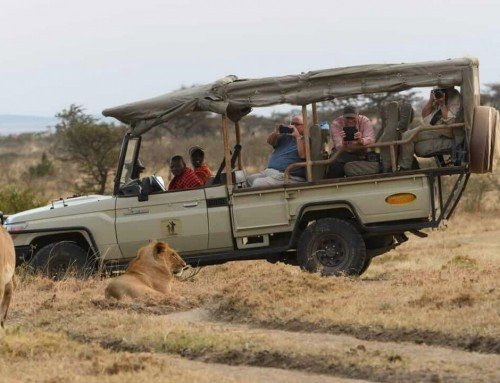 11 Things to Ask Before Booking Your Safari