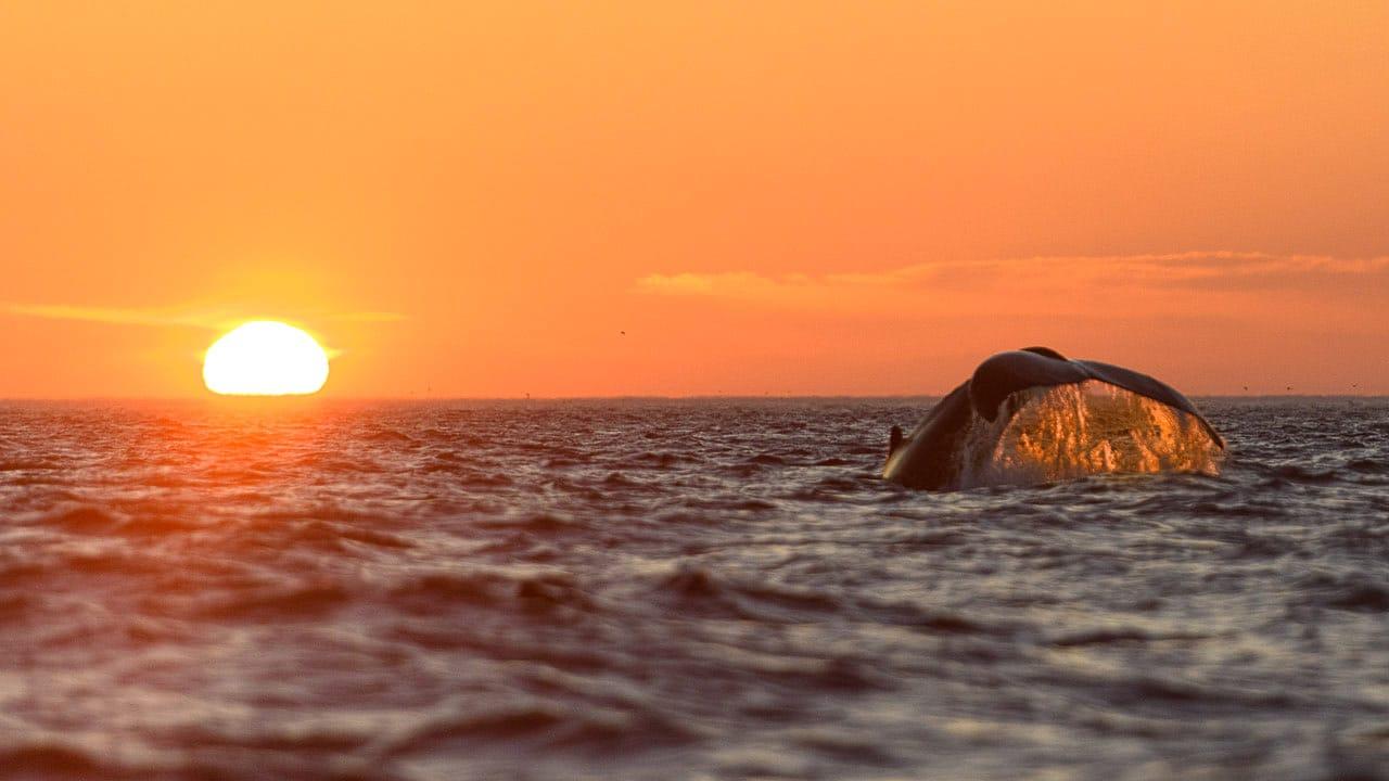 humpback whale newfoundland photo workshop