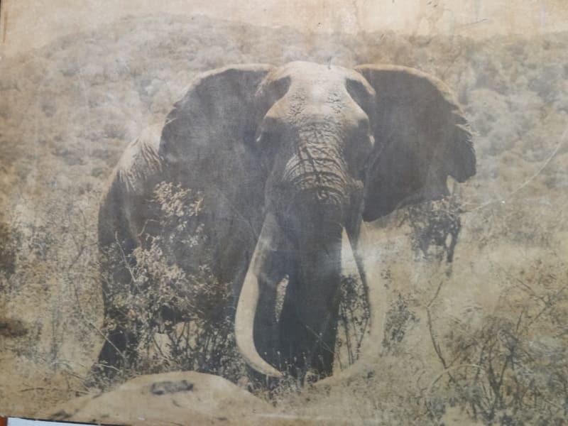 ahmed kenya biggest elephant
