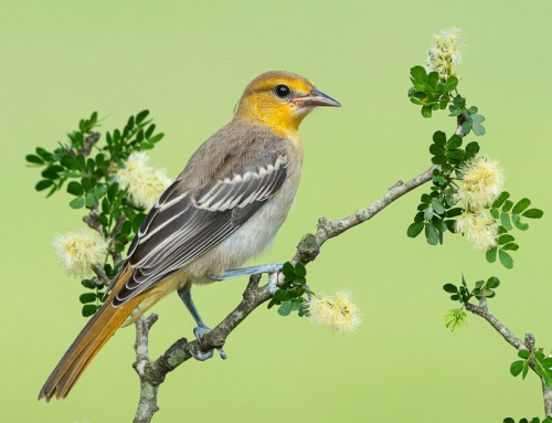 NEW! Texas Bird Photography Workshop