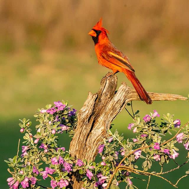 Green Jay Best Texas Bird Photography Workshop