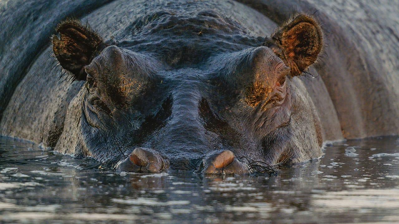 best botswana Zimbabwe Zambia Photo Safari
