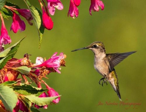 Backyard Bird Photography with a Mentor