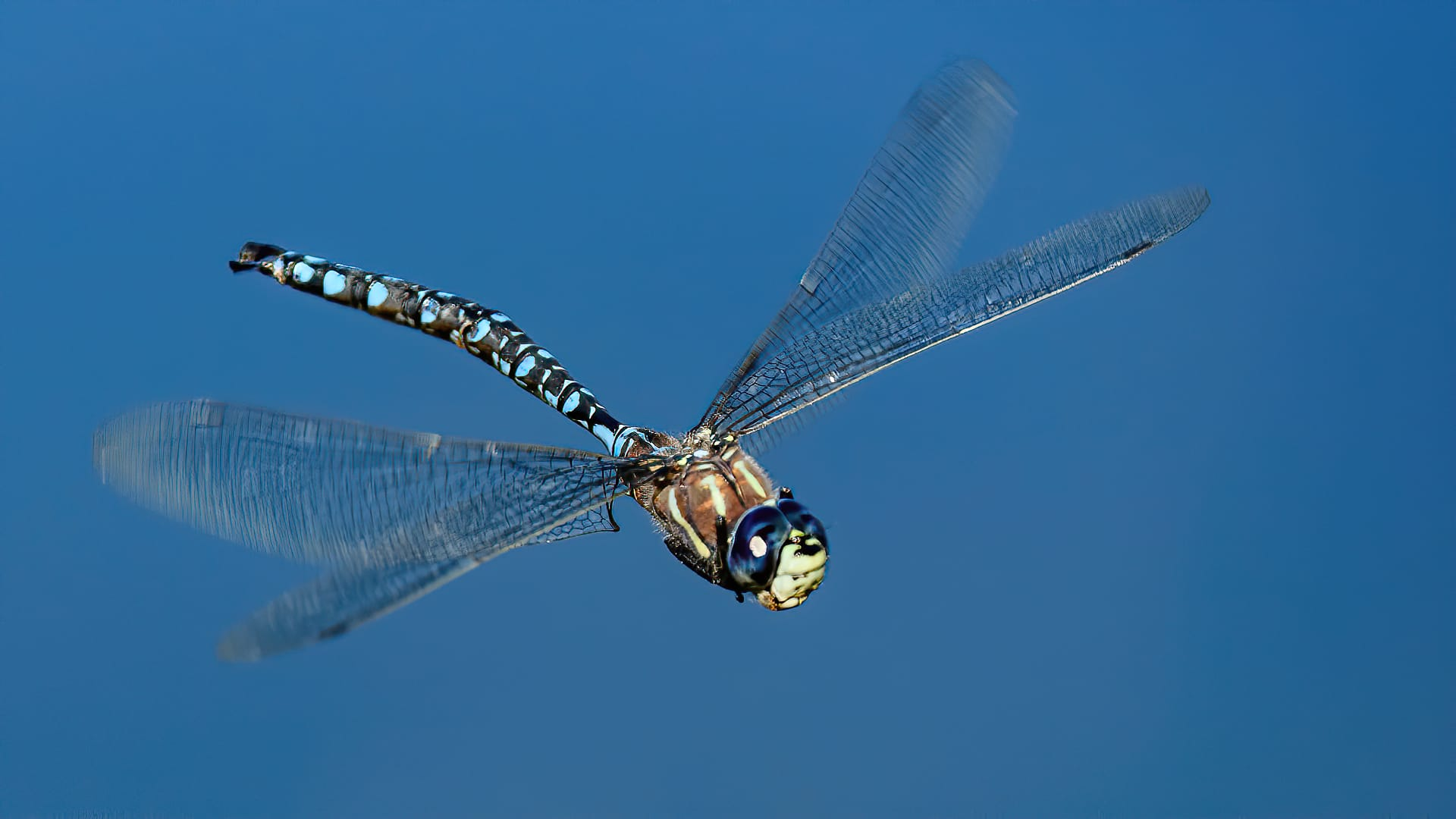 Dragonfly Flight Shot Strong Motion Blur