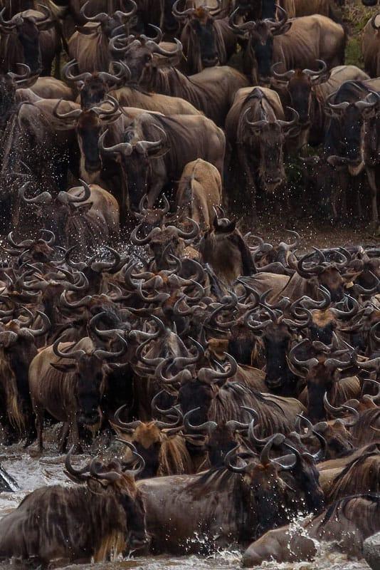 Best Tanzania Photo safari Wildebeest Migration 2020