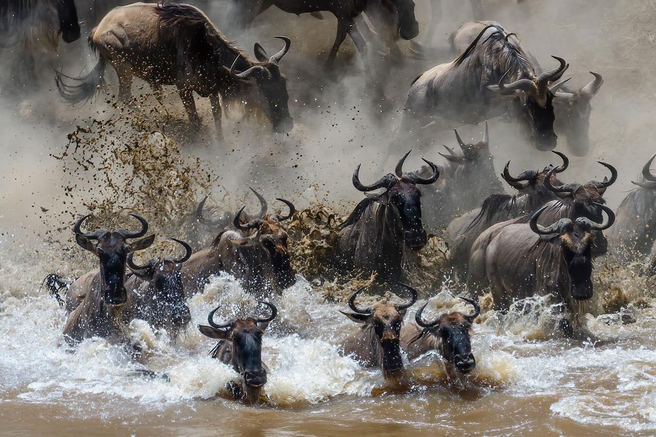River Crossing Great Wildebeest Migration
