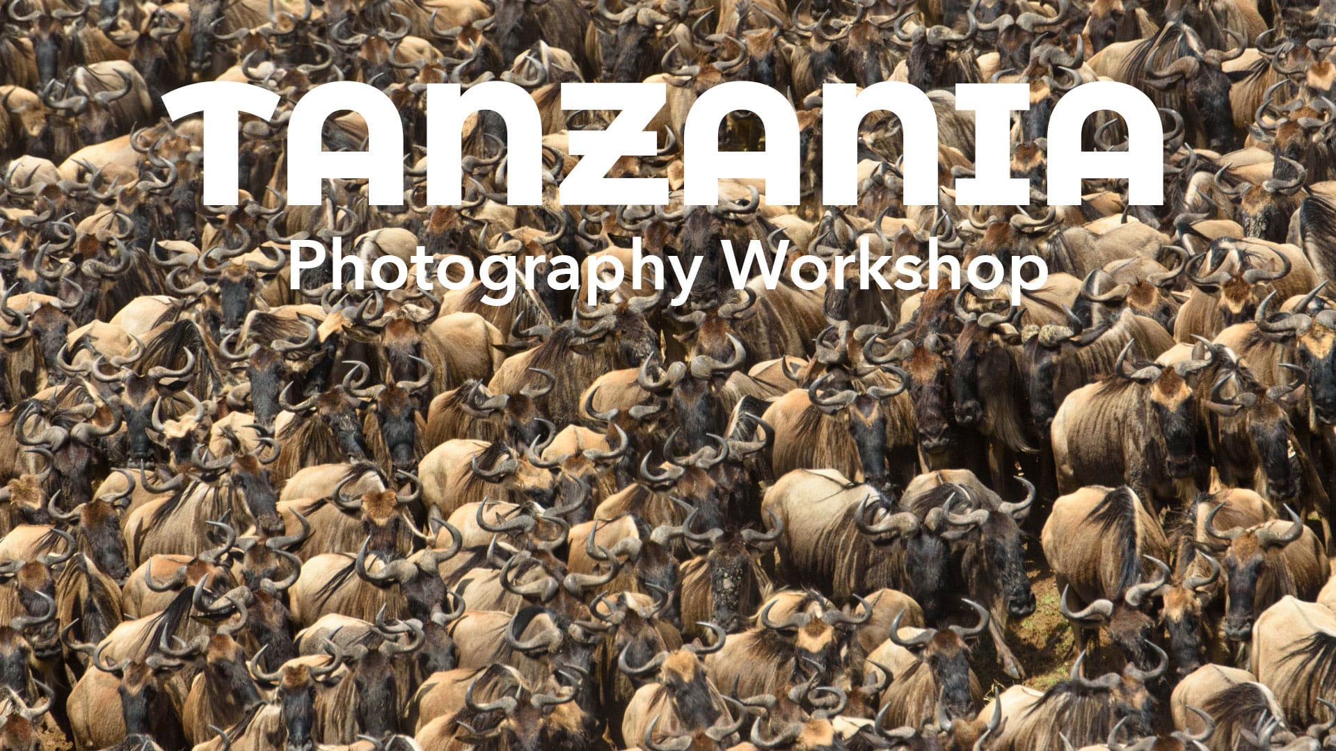 Best Tanzania Photo safari Wildebeest Migration 2020