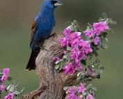 Client Image Texas Bird Photography Workshop 2021 1