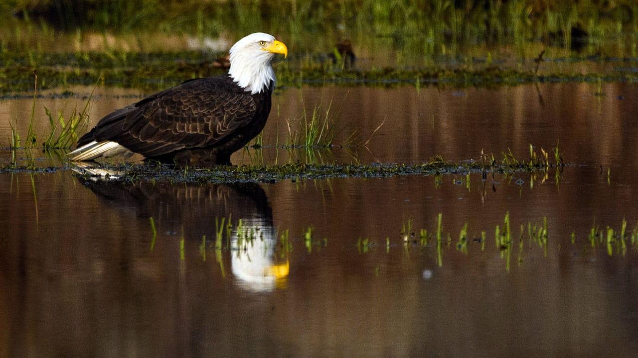 Birds Galore Bald Eagles And More Photo Workshopp British Columbia