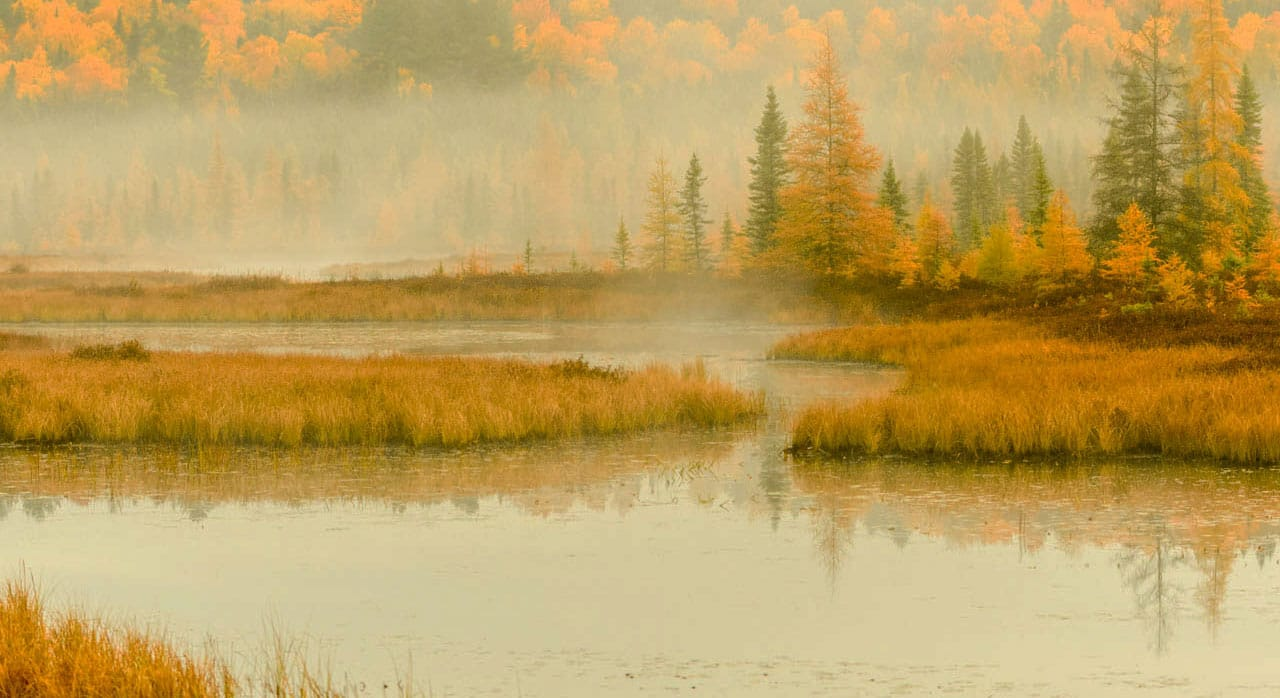 Fall Foliage And More Photo Workshop
