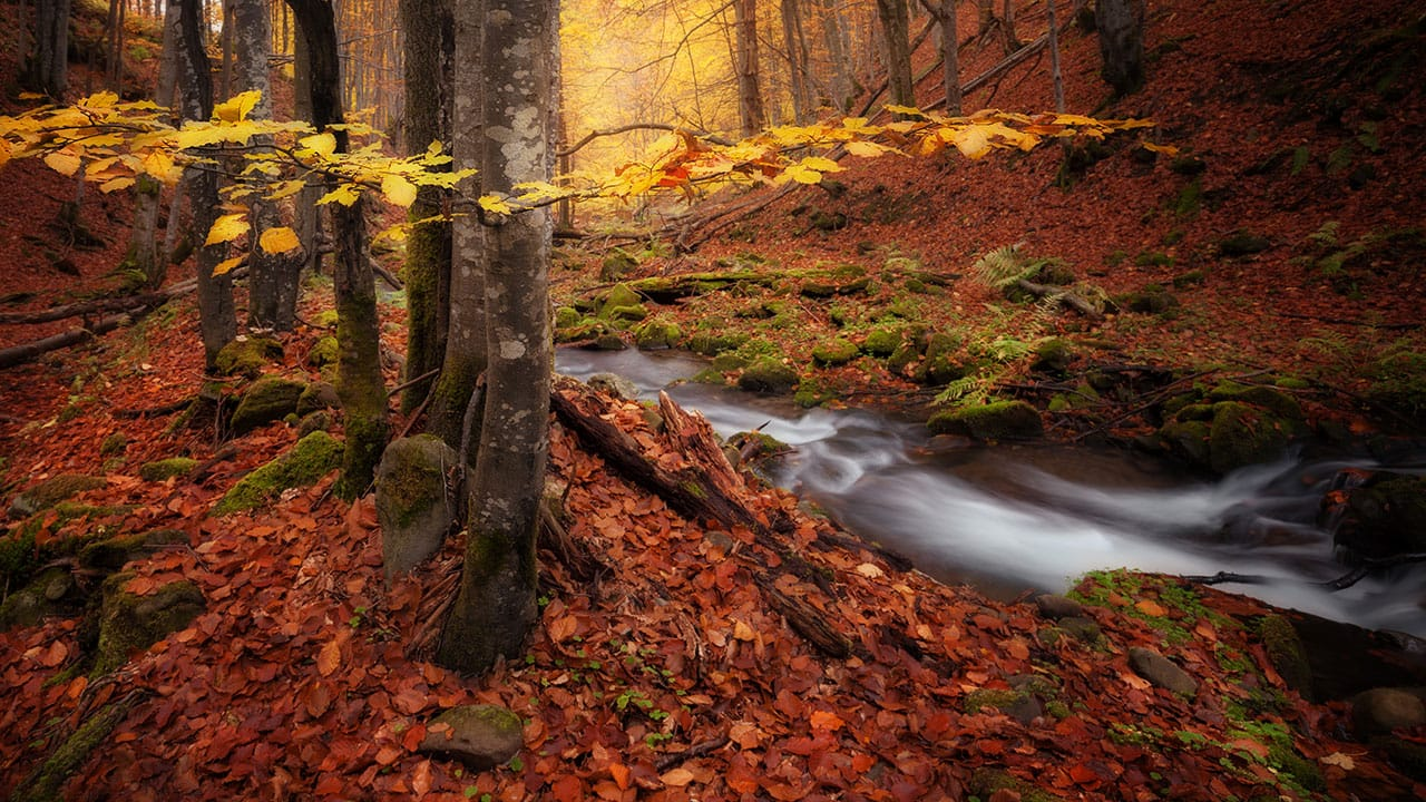 Fall Foliage And More Workshop waterfall